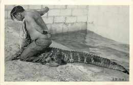240353-Native American Seminole Indian, Alligator Wrestling In Fort Lauderdale, Florida - Indiaans (Noord-Amerikaans)