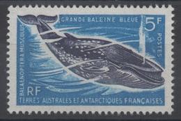 TAAF - YT N° 22 - Neuf ** - MNH - Cote: 31,00 € - Terres Australes Et Antarctiques Françaises (TAAF)
