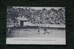 Courses De Taureaux - La Pose Des Banderilles - Corrida