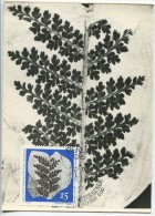 Paleontological Plants - Sphenopteris hollandica