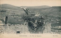 AFRIQUE - ALGERIE - CONSTANTINE - Un Nid De Cigognes - Constantine