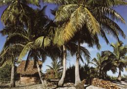 Petite Plantation De Cocotiers - Polynésie Française