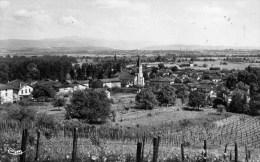 01 VILLIEU Vue Générale Vignes ,cpsm 1953 - Autres Communes