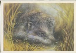 Hedgehog - (by Illustrator A. Isakov) - Animals