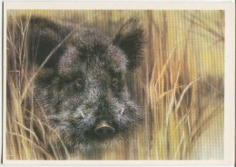 Wild Boar - (by Illustrator A. Isakov) - Animals