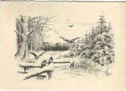 Rudolf Olsen  Postcard, Birds In A Wood, - Christmas