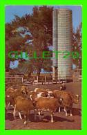 DALLAS, TEXAS - DAIRY HERD OF GUERNSEYS WITH SILO - PUB. BY TEXACOLOR CARD CO - - Dallas