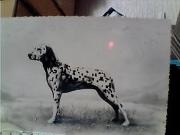 CANE DOG DALMATA BEPI  DI MILLI STEINER GENOVA   VB1953 EW1390 - Hunde