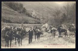 Cpa Du 66 -- Muletiers Transporteurs De Bois -- Pyrénées Orientales   AA4 - France
