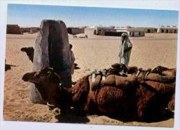 LE SUD FASCINANT - Algeria
