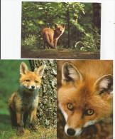 FUCHS Renard Fox Volpe 3 Karten - Animaux & Faune