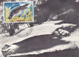 Nijl Weekschildpad - Tortue Du Nil (1965 - Antwerpen) - Maximumkarten (MC)