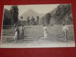 CAUTERETS  (environs) -  Au Champ De Péguère -  1907  -  (2 Scans) - Cauterets