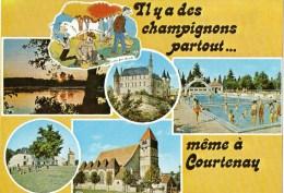 1 Cp Courtenay - Courtenay