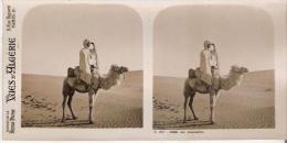 VUES D'ALGERIE  257.5082 UN CHAMELIER (PHOTO STEREOSCOPIQUE ANCIENNE) - Stereoscopic