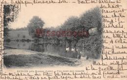 42 - RIORGES - Une Marre Aux Canards 1901  -  Voir Les  2 Scans - Riorges