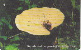 JERSEY ISL. - Mushrooms 4/Dryads Saddle, CN : 71JERD(normal 0), Tirage %20000, Used - United Kingdom