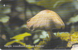 JERSEY ISL. - Mushrooms 4/Woodland Decay Fungus, CN : 71JERC(normal 0), Tirage %20000, Used - United Kingdom