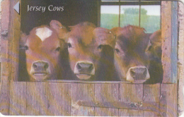 JERSEY ISL.(GPT) - Jersey Cows, CN : 58JERA(0 With Barred), Used - United Kingdom
