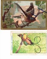 Chromo Pinson - Bon Point Oiseau De Paradis - Albums & Catalogues
