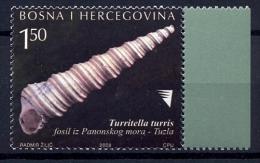 BOSNIA HERZEGOVINA Shells - Conchiglie
