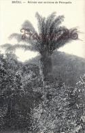 Brésil Brazil - Palmier Aux Environs De Petropolis - 2 SCANS - Brésil