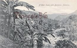 Jamaica Jamaïque - A River Scène With Bananas - 2 SCANS - Jamaïque