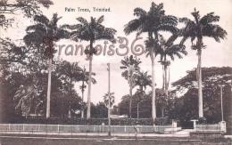 Trinidad - Palm Trees - 2 SCANS - Trinidad