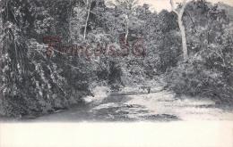 Trinidad - River Scène - 2 SCANS - Trinidad