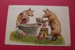 Cp  Famille De  Cochons + Baignoire - Schweine