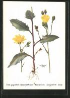 CPA Illustrateur Geglättetes Habichtskraut, Hieracium Levigatum - Fleurs, Plantes & Arbres
