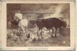 Musée Du Luxembourg, Intérieur De L'Etable, Par Thoren - Musées