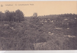 KALMTHOUT : De Calmpthoutsche Heide - Kalmthout