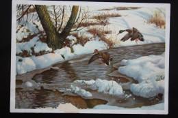 """Ducks Came"" - Old Art Postcard 1950s. - Duck - Hunting - Oiseaux"