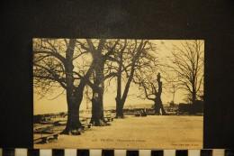CP, 73, THONON Promenade Du Château N° 1508 Voyagé En 1911 Ed Pittier - Thonon-les-Bains