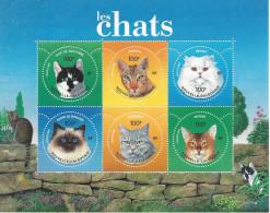 Thématique Sur Les Chats - Hauskatzen