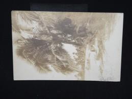 RAROTONGA - Carte Postale Photo Très Rare De Rarotonga En 1928 Pour La France - Pas Commun - Voir Lot P7905 - Postcards