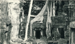 ASIE - CAMBODGE - ANGKOR - TA PROHM (1970) - Cambodia