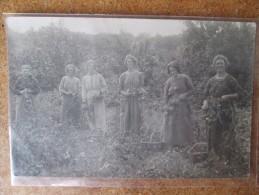 CARTE PHOTO DE CUEILLEUSES - Cultures