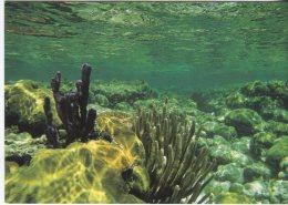 Go-card Advertising Postcard, Cay Caulker, Belize, Photo Mikkel Alexander Grabowski, 4088 - Belize