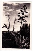 Les Iles D'Hyeres Solitude (Ile Du Levant) - Hyeres