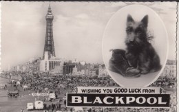 POSTCARD TERRIER DOG SCOTTIE TYPE WISHING YOU GOOD LUCK FROM BLACKPOOL POSTED 1963 - Dogs