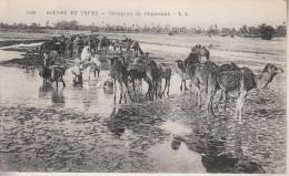 Afrique - Sahara Occidental - Scènes Et Types - Un Troupeau De Chameaux - Sahara Occidental