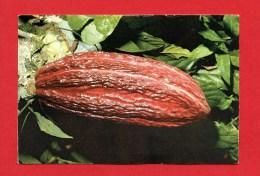 Trinidad - Cocoa Pod - Trinidad