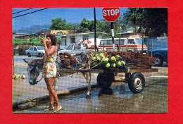 Trinidad - Local Beauty - With Donkey And Cars - Trinidad