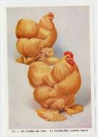 Fort - Hanen En Hennen - Coqs Et Poules - Roosters And Hens, Kippen, Poulets, Chickens - 12 - Unclassified