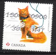 Canada, Chat, Cat, Vétérinaire, Vet, Veterinary, Stétoscope - Domestic Cats