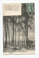 Cp , 17 , ILE D'OLERON , Saint TROJAN , Dans Les Pins , F. Mousset , Voyagée 1908 - Ile D'Oléron