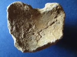FOSSILE Avec Quartz. à Déterminer (Crane ?) (5 Scans) - Fossiles