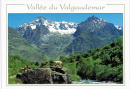 Vallée Du Valgaudemar L'olan - Chèvres - France